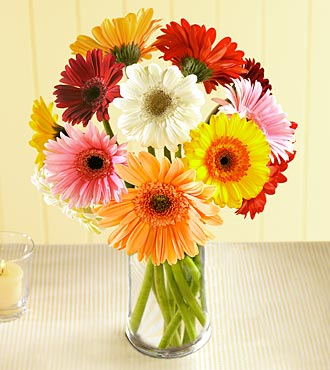Gerberadaisy Flowers on Flowers Gerbera Daisy1